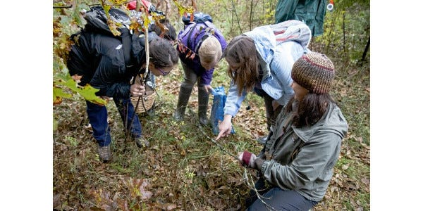 Marie Trest (second from right) explains the 'algal rustling' taking place among the lichen coating a dropped branch.