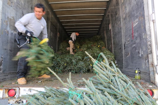 Pre-cut holiday trees