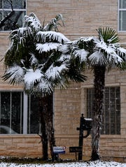 Snow falls on a trio of palm trees along Elmwood Drive Saturday. Wintry weather was reported across much of the Big Country.