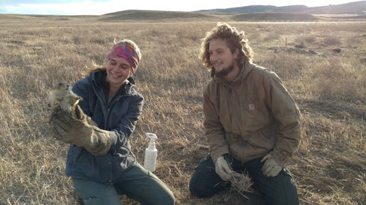 Prairie Dog Relocate