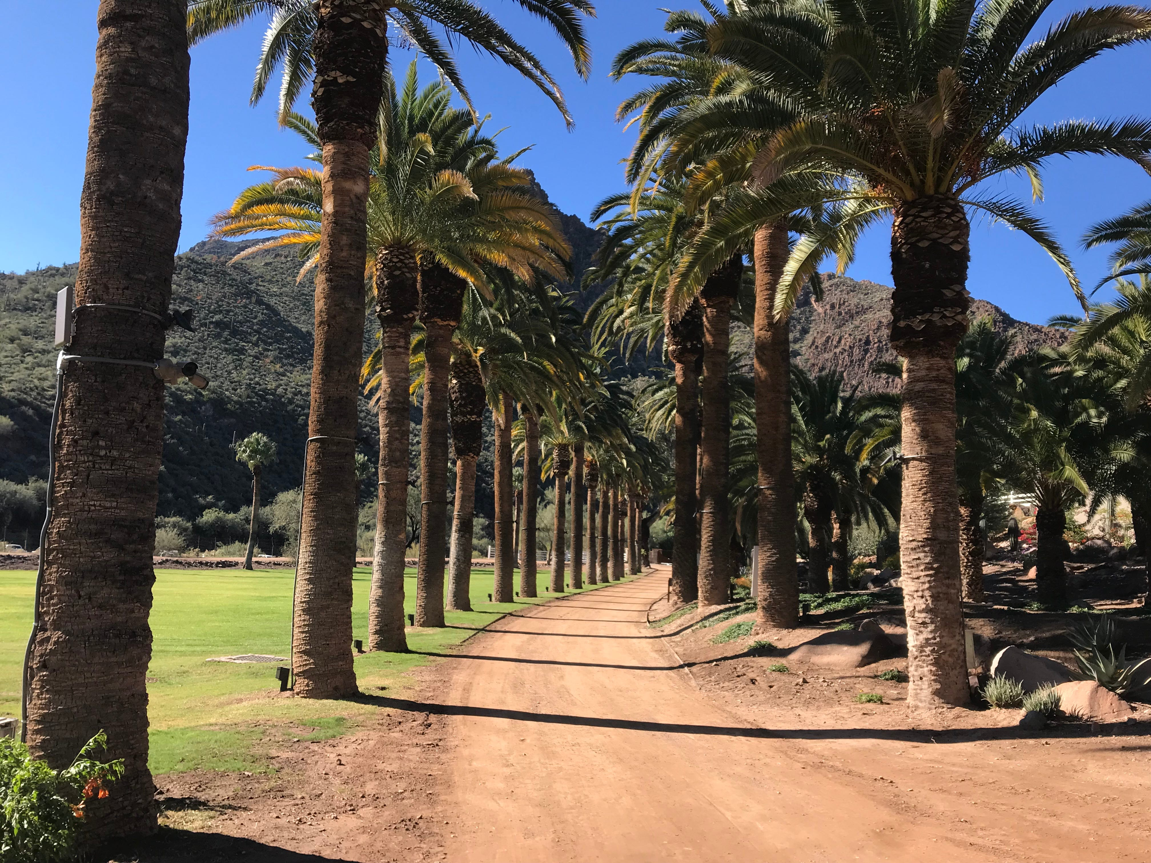 The palm-lined drive leading to Castle Hot Springs, a resort north of Phoenix.