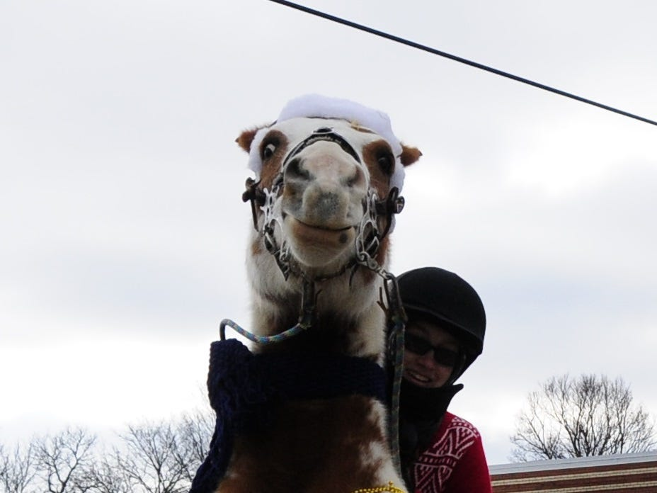 Kitty rears on command from Colleen Kinney before the Lexington Old-Fashioned Christmas Horse Parade on Saturday, Dec. 8, 2018.