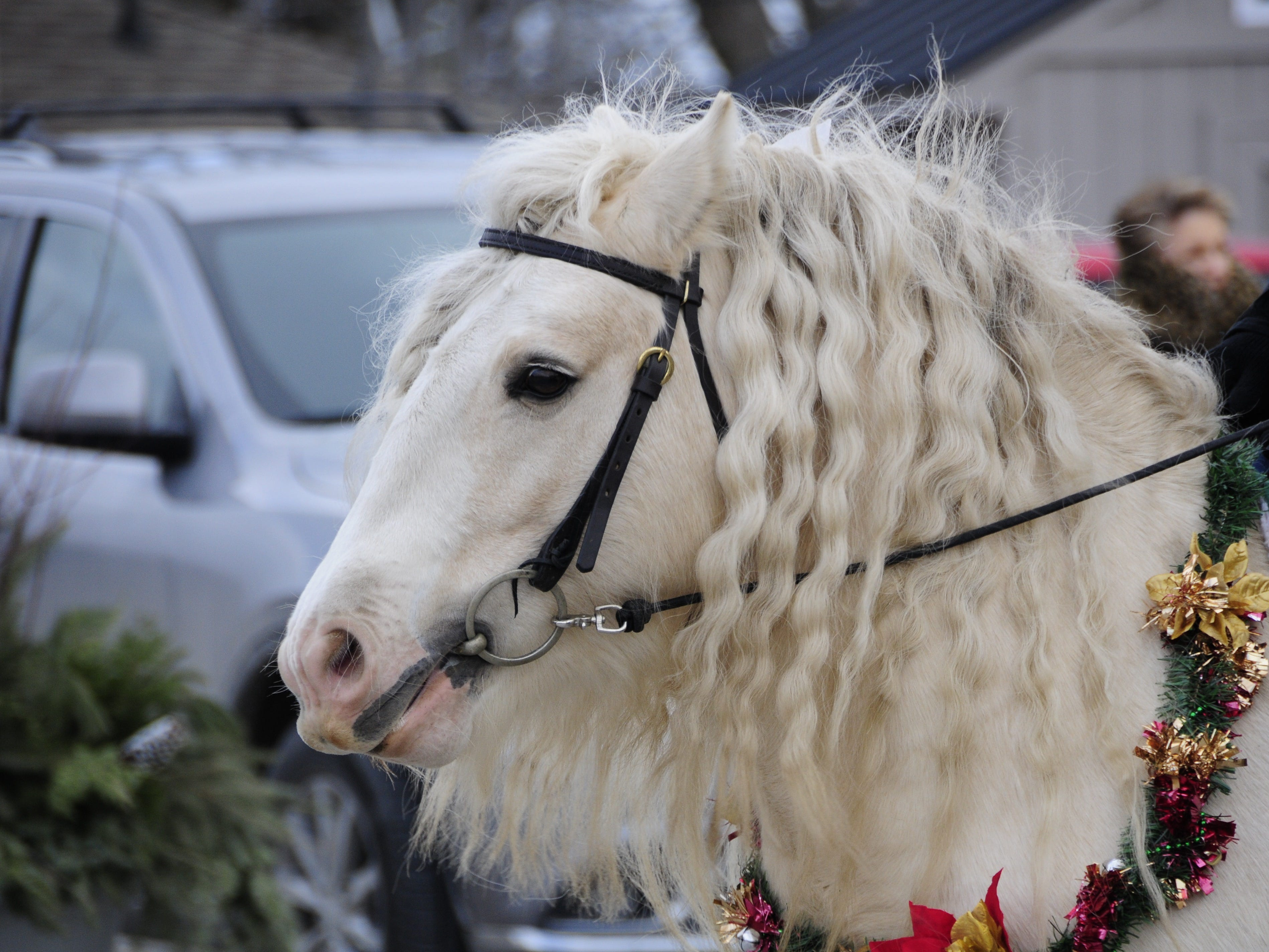 Keisling, a Gypsy Vanner horse, was at the Lexington Old-Fashioned Christmas Horse Parade on Saturday, Dec. 8, 2018.