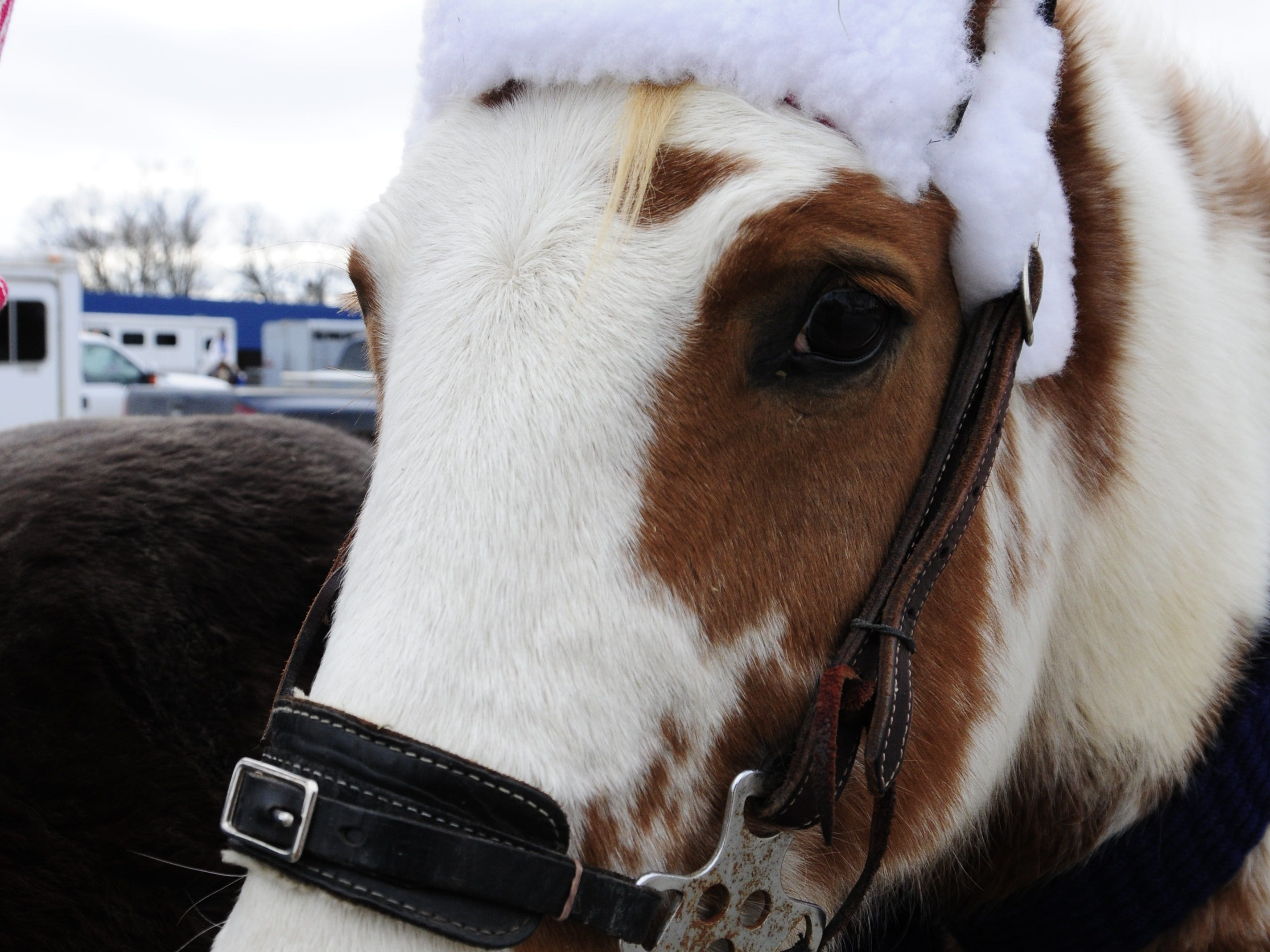 Kitty gets ready for the Lexington Old-Fashioned Christmas Horse Parade on Saturday, Dec. 8, 2018.