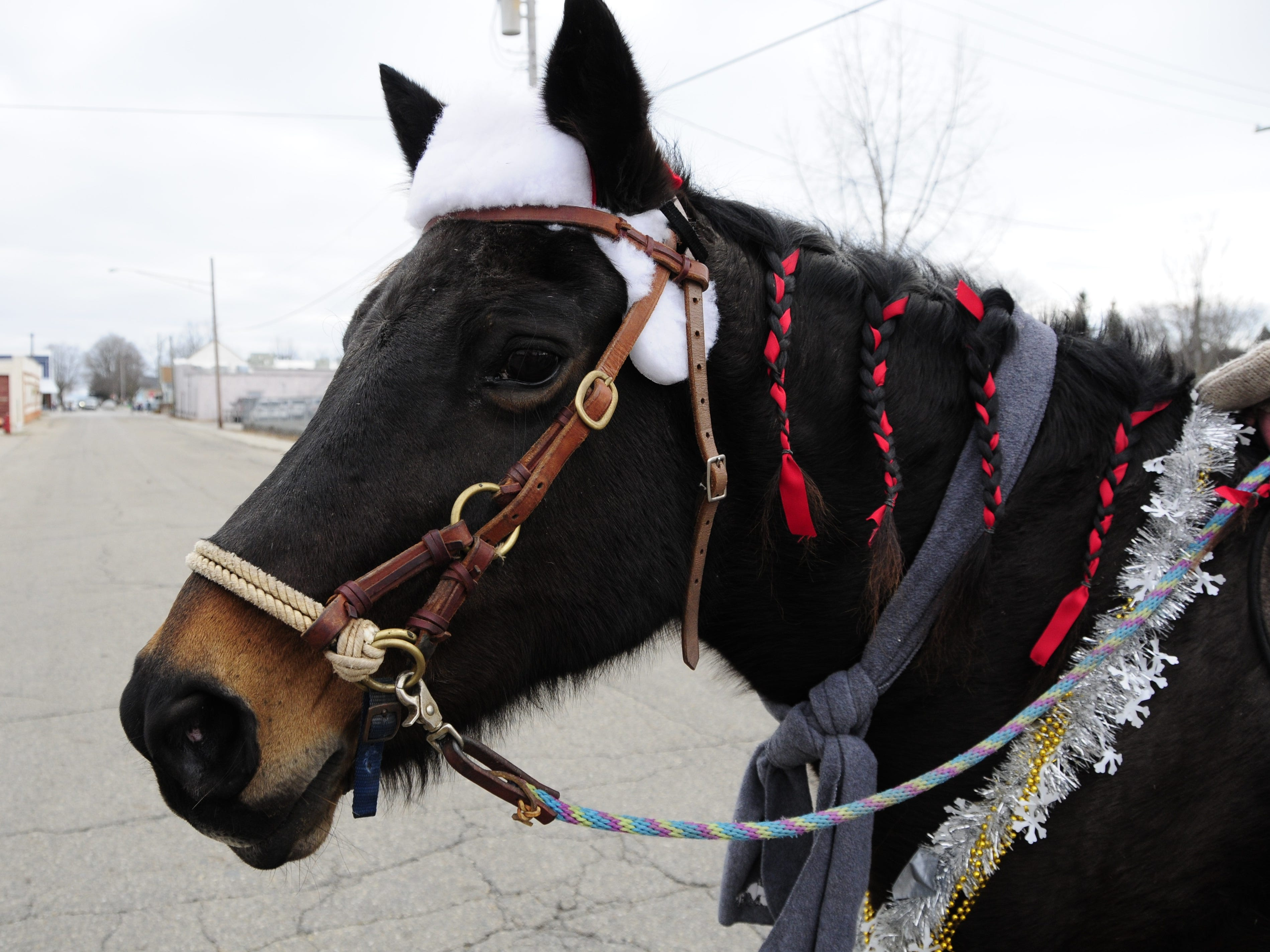 Cocoa, a 23-year-old Tennessee Walker mix, is all dressed up and ready for the Lexington Old-Fashioned Christmas Horse Parade on Saturday, Dec. 8, 2018.
