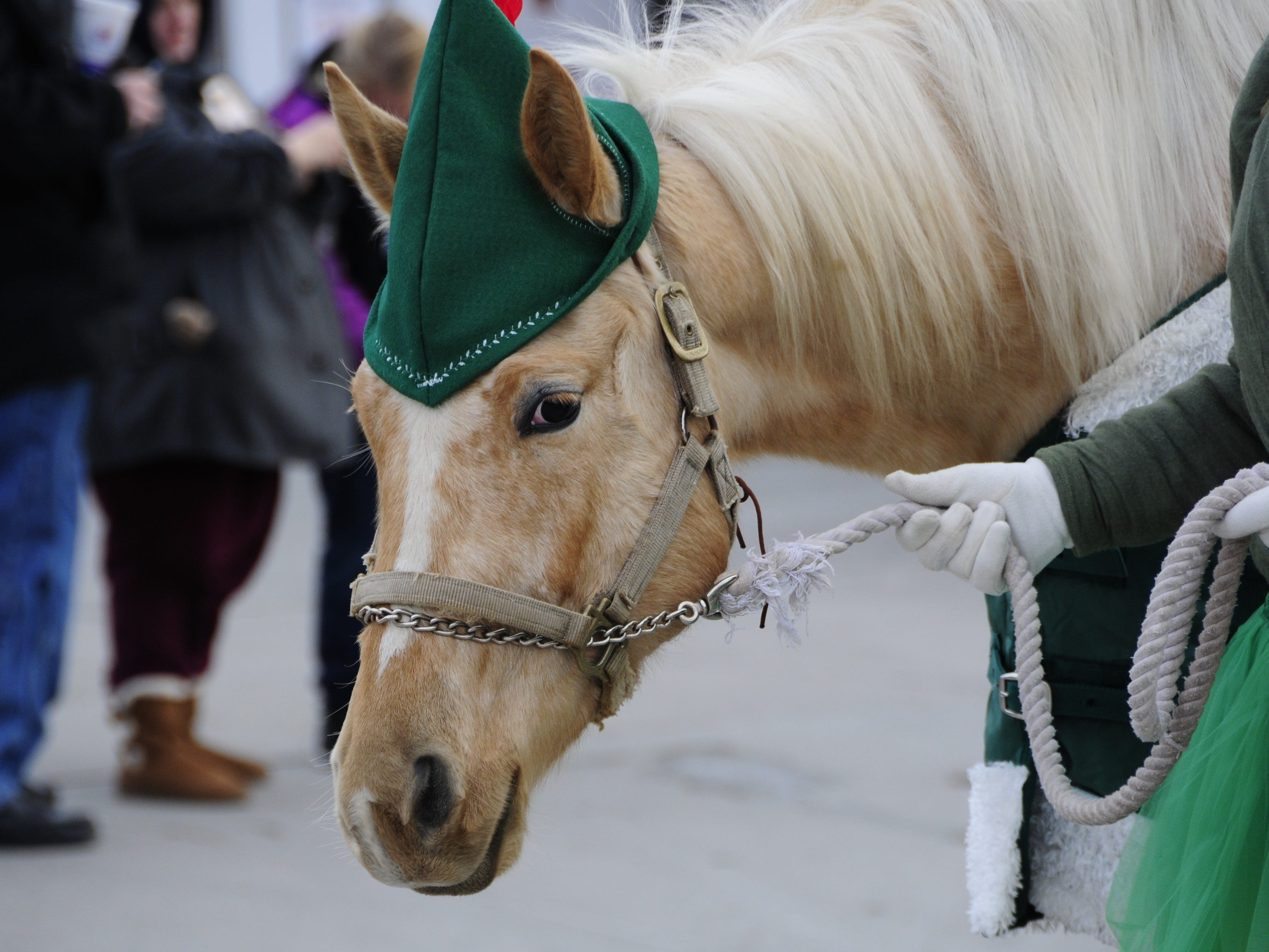A horse dressed as an elf walks in the Lexington Old-Fashioned Christmas Horse Parade on Saturday, Dec. 8, 2018.