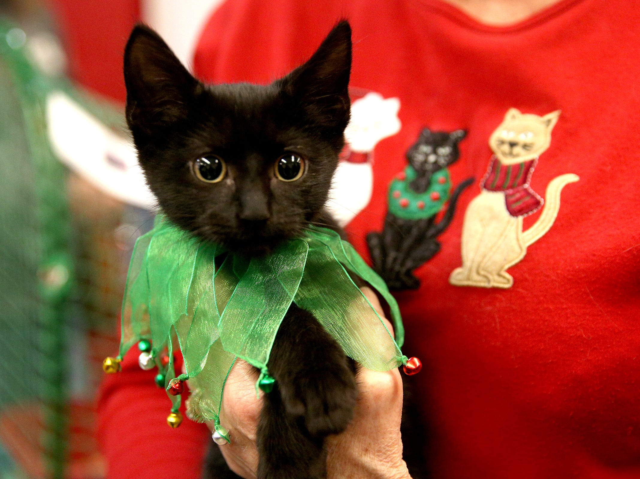 Salem Friends of Felines hosts a cat adoption at the Salem Holiday Market on Saturday, Dec. 8, 2018.