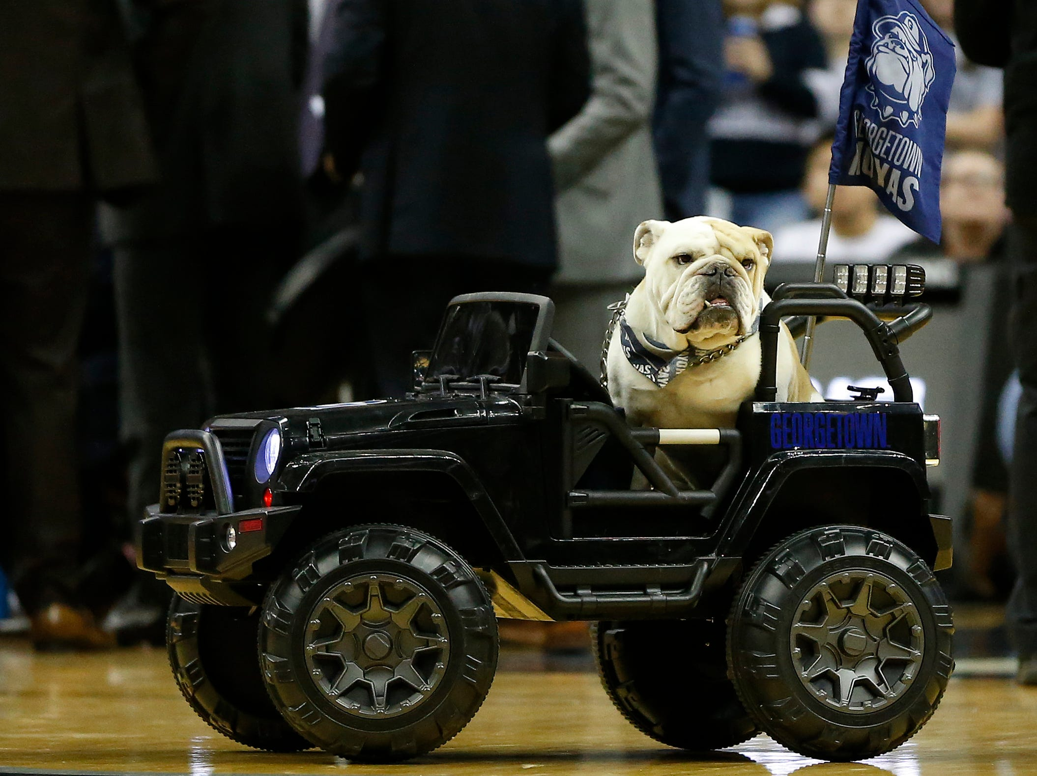 """Feb. 24: Georgetown Hoyas mascot """"Jack the Bulldog"""" rides onto the court during a stoppage in play in the first half against the Providence Friars at Capital One Arena."""