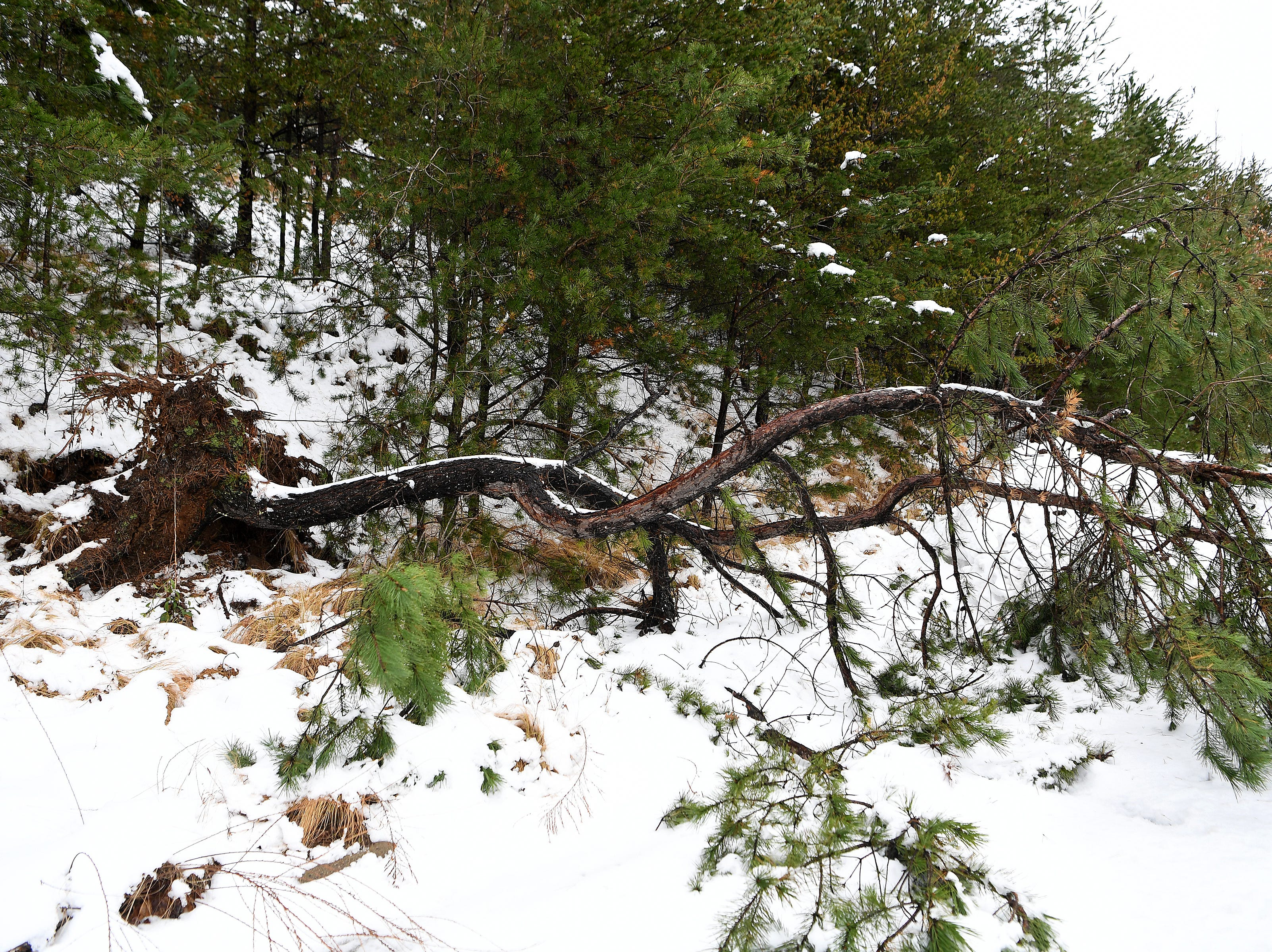 A tree was uprooted along River Hills Road after a heavy snow on Dec. 9, 2018.
