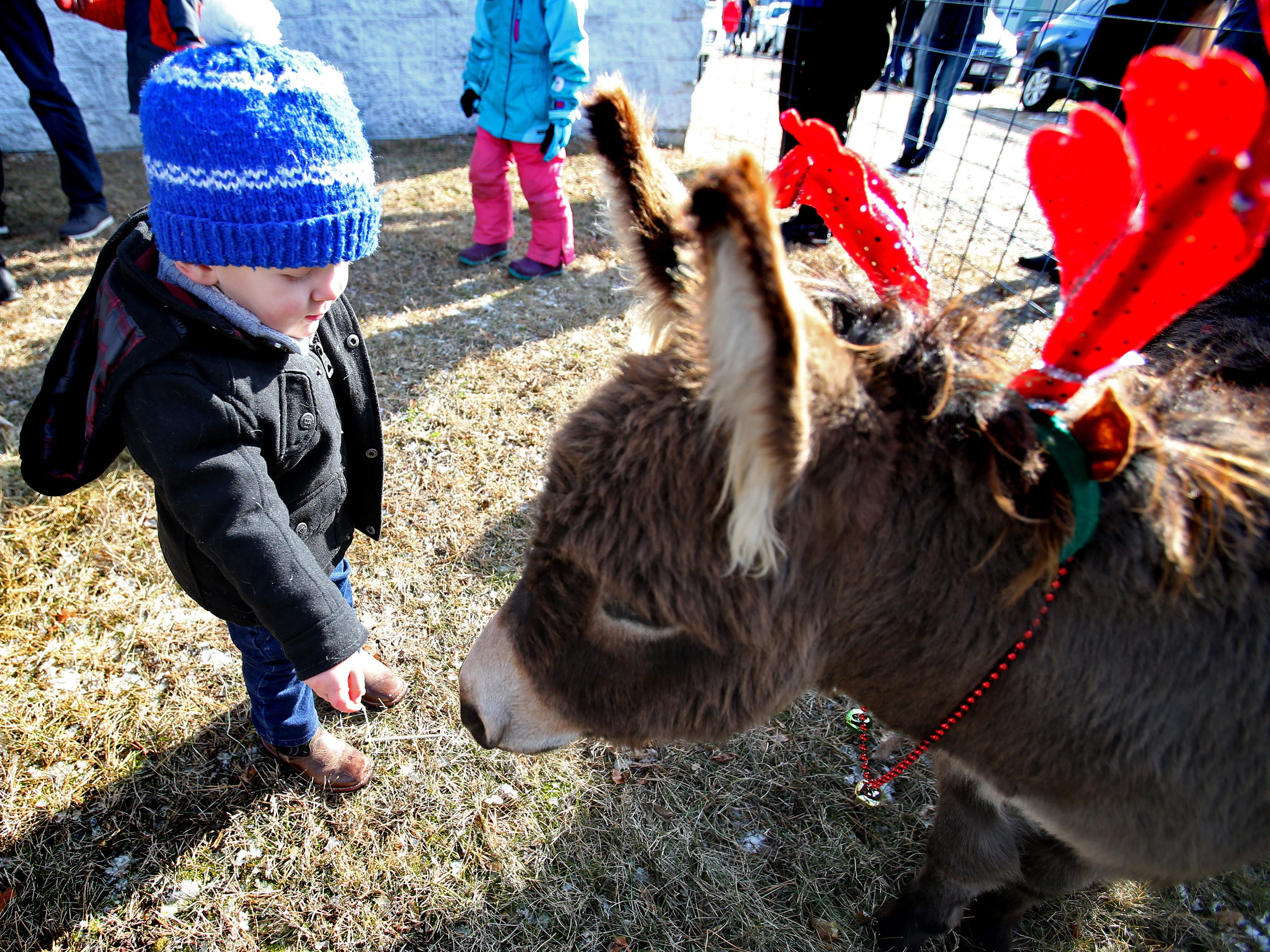 Adam Prochniak, 18 months, tries to get a donkey to snack on some hay during Christmas in Wales on Dec. 8.