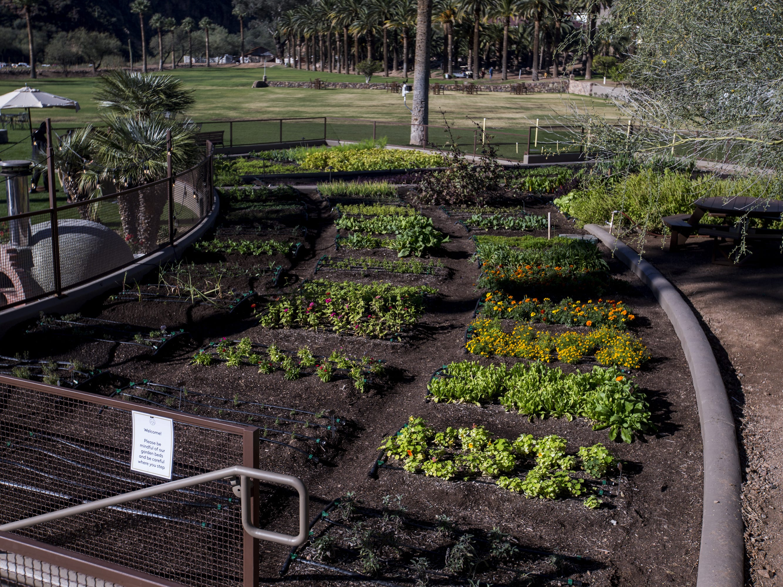 A garden is pictured at the newly renovated Castle Hot Springs resort is pictured on Saturday, Dec. 8, 2018, in Morristown, Ariz. It has been 50 years since the resort has hosted any guests.
