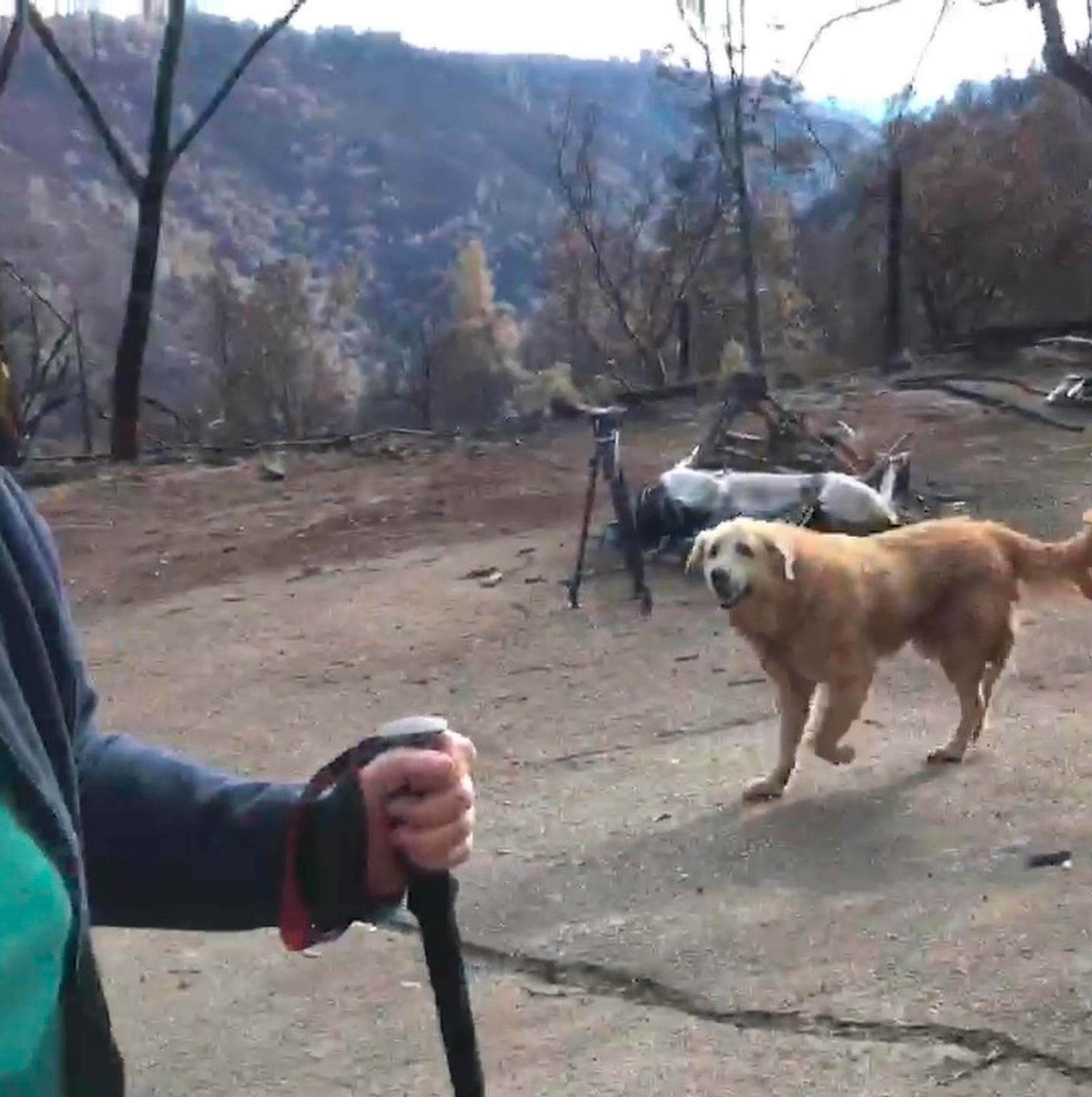 Dog survives California wildfire, guards home for nearly a month