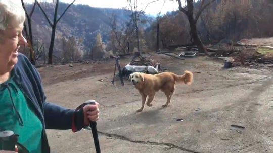In this Friday image from video provided by Shayla Sullivan, Madison, the Anatolian shepherd dog that apparently guarded his burned home for nearly a month, approaches his owner, Andrea Gaylord, as she was allowed back to check on her burned property in Paradise. Sullivan, an animal rescuer, left food and water for Madison during his wait. Gaylord fled when the Nov. 8 fire destroyed the town of 27,000.