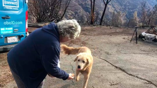 In this Friday image from video provided by Shayla Sullivan, Madison, the Anatolian shepherd dog that apparently guarded his burned home for nearly a month, approaches his owner, Andrea Gaylord, as she was allowed back to check on her burned property in Paradise.