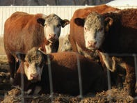 UW-Extension Beef Grazing Workshop planned