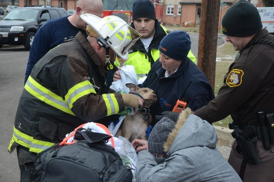 First responders treat Zeus, a 4-month-old dog rescued from the fire in Springfield Monday, Dec. 10, 2018.