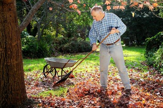 Man Raking Leaves In Garden