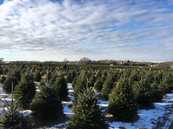 Whispering Pines Tree Farm in Oconto has grown from 16 acres to 200.
