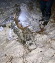 Christmas tree hunters discovered the moose carcass on Saturday, Dec. 1, and reported it to FWP on Dec. 3.