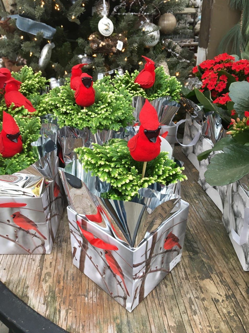 Red cardinals adorn frosty fern already wrapped for a festive gift.