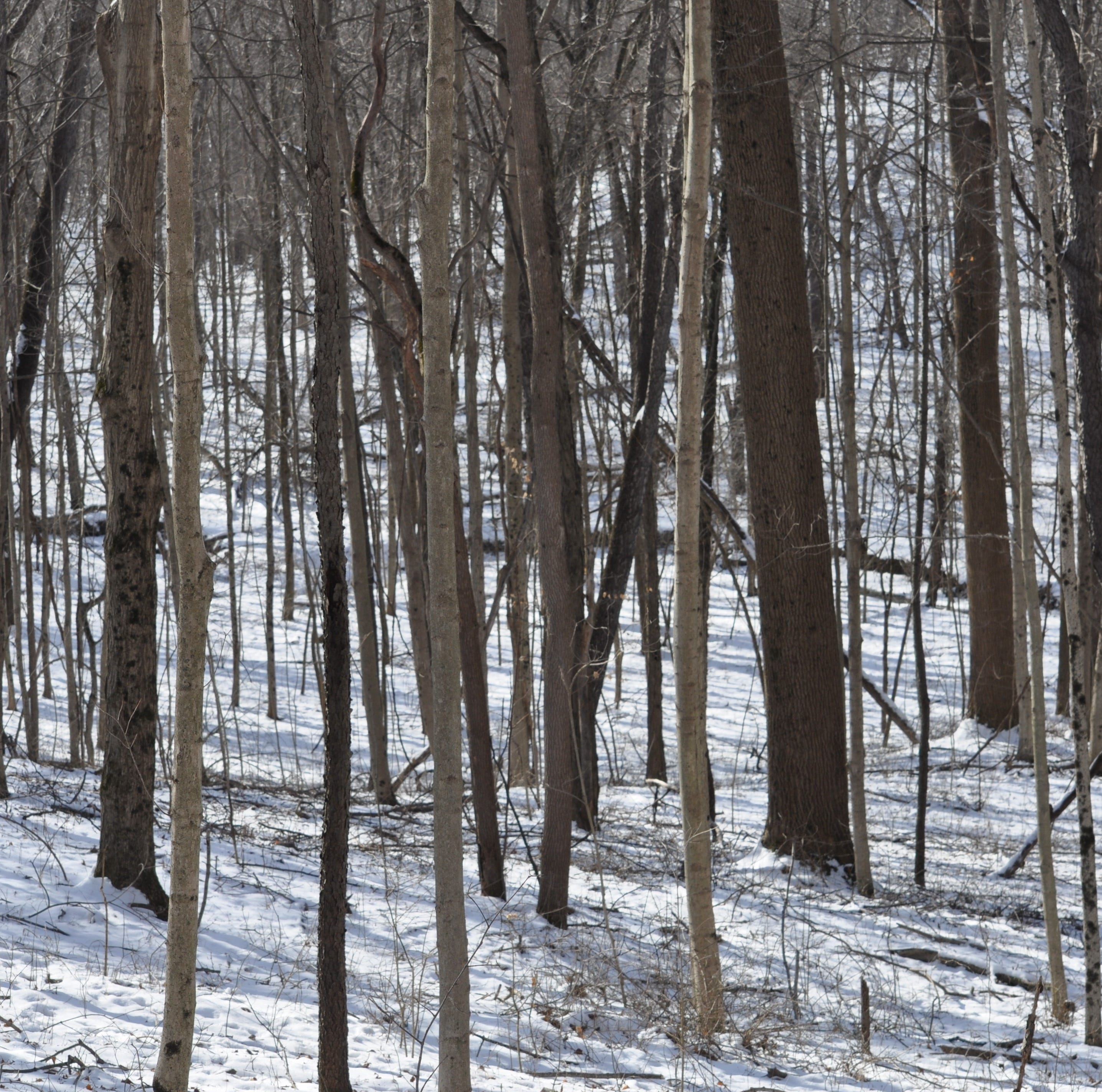 Discover the life of winter in the woods