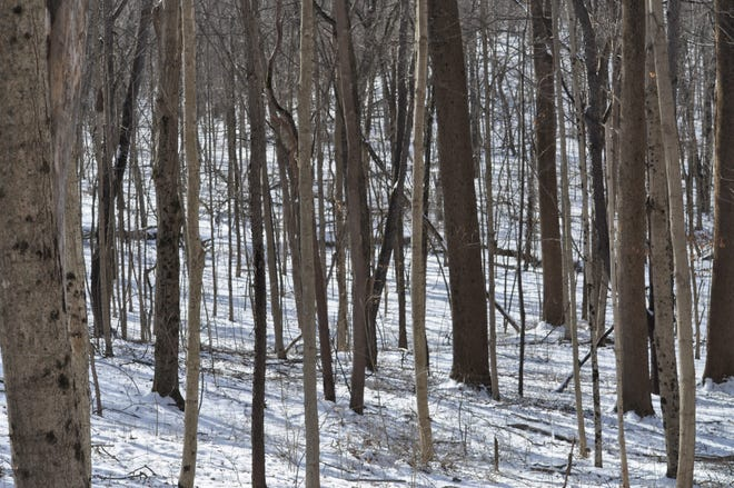 Careful hikers can still find life in the woods during the winter.