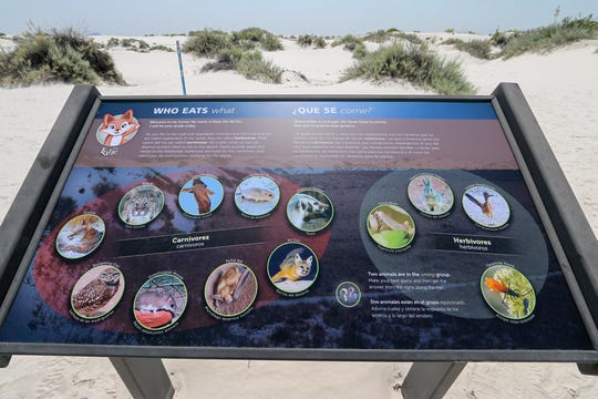 Kids love exploring and learning about the animals at White Sands on the Dune Life Nature Trail.