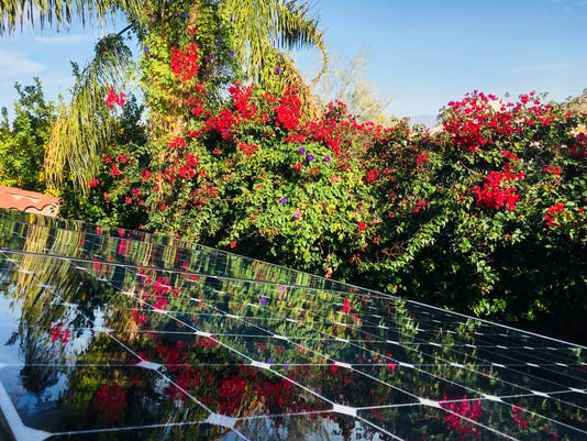 Flowers Reflected On Solar Panels