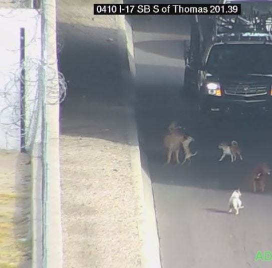 Pack of dogs roams Interstate 17 in Phoenix, slowing traffic and vexing troopers