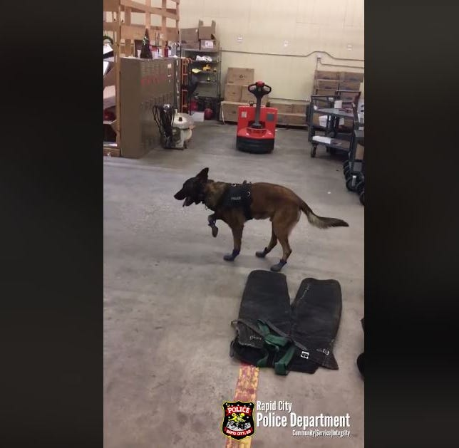 Rapid City K9's attempt to wear snow boots goes viral after Facebook video posted
