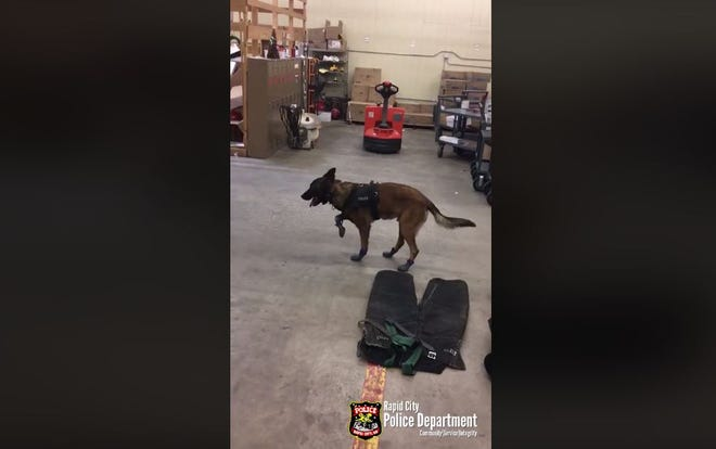 Jary, a Rapid City Police Department K9, tried on some snowboots in a viral video that was posted to Facebook. It has more than 3 million views.
