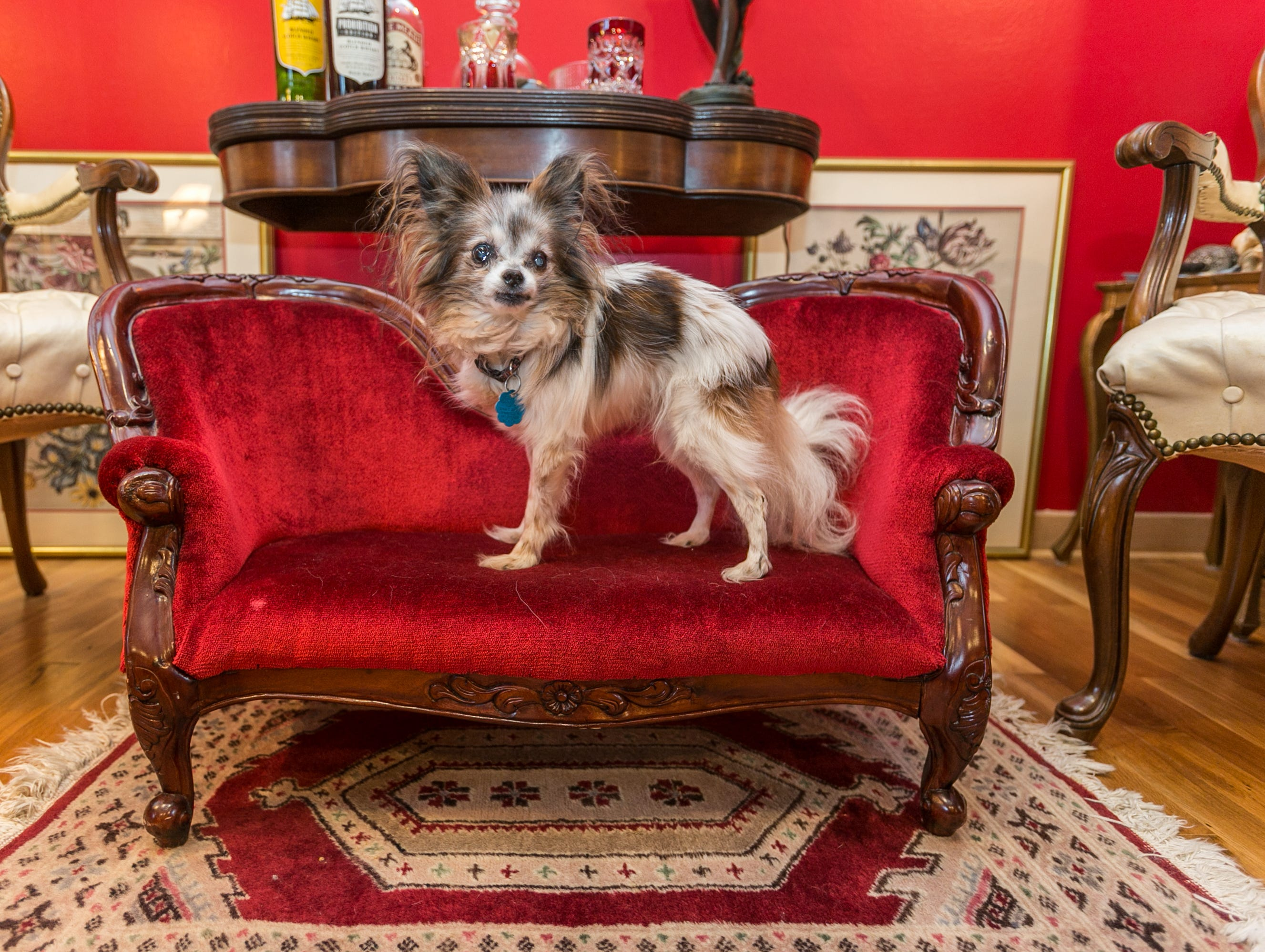 Pee Pee, Jeff and Kyaw's 16- or 17-year-old Papillon, has a settee to match his humans' in the red room, where the couple go to discuss weightier issues.