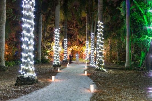 Nol Royal Palm Grove