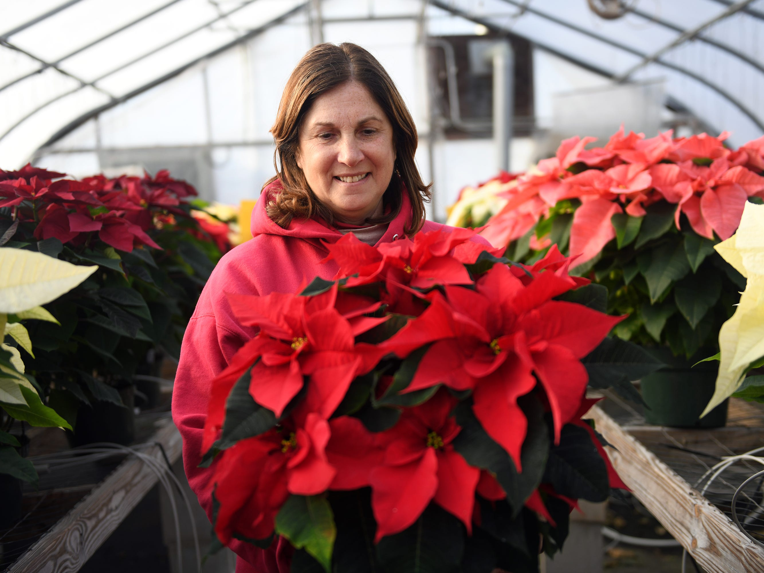 Patty Huffman holds one of the poinsettias for sale at her farm in Vineland. Huffman Farms starts to grow poinsettias in July so they are ready for the Christmas season at 296 S. Blue Bell Road in Vineland.