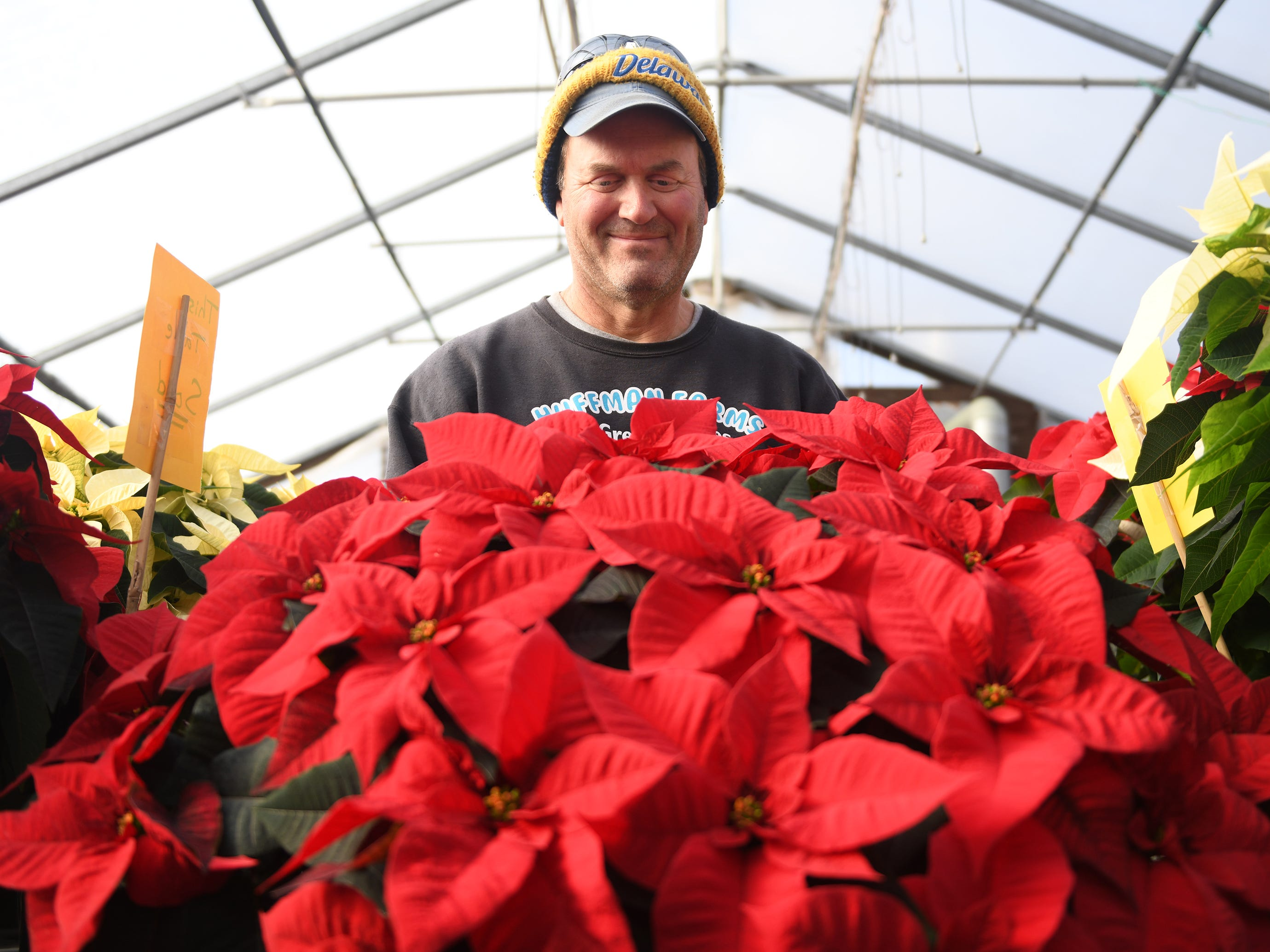 Tim Huffman holds a large poinsettia that his farm produces. Huffman Farms starts to grow poinsettias in July so they are ready for the Christmas season. The farm produces over 7,000 plants in several different colors including red, white, burgundy, pink and even some speckled varieties.