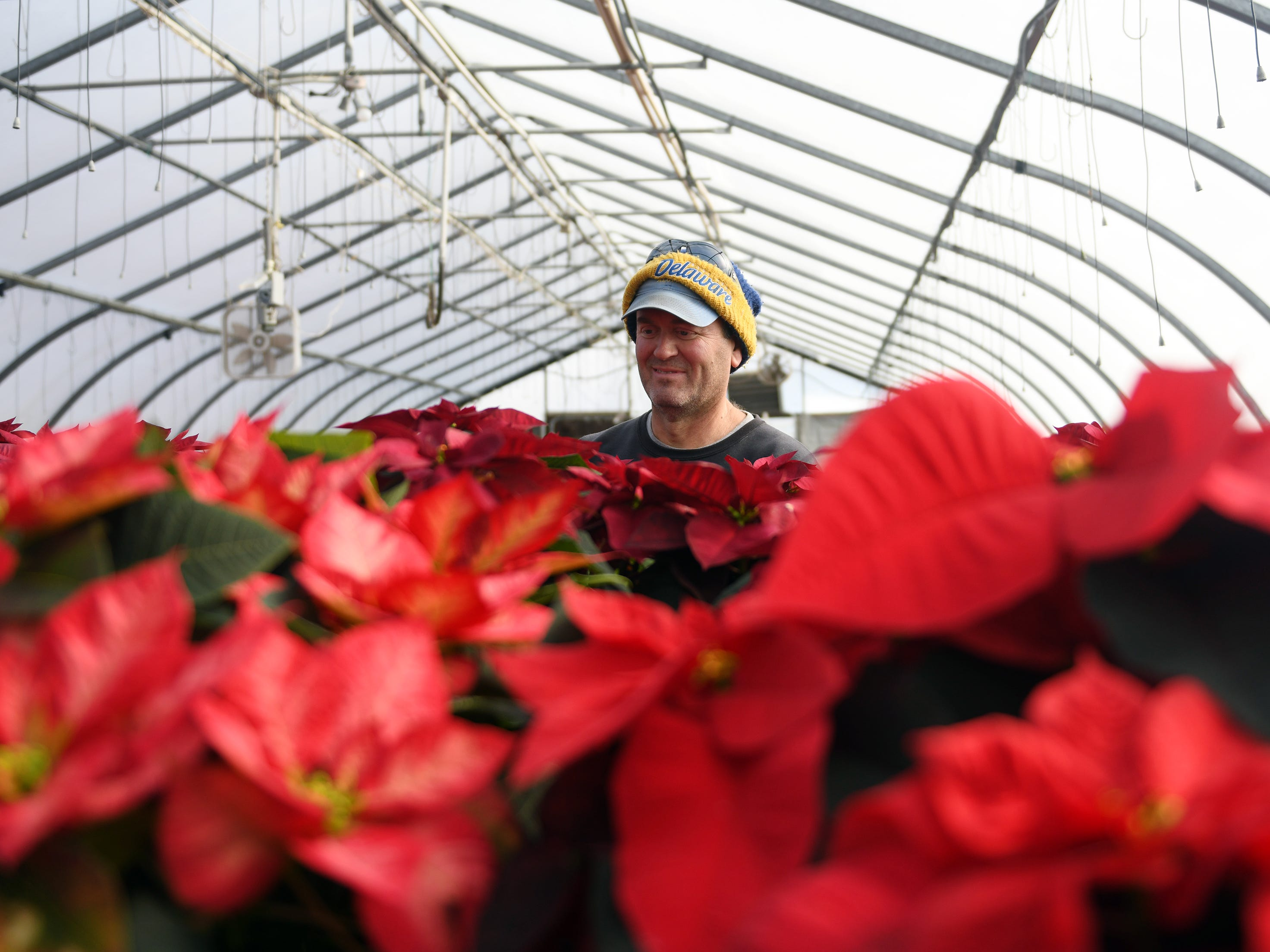 "Tim Huffman looks over a wide selection of poinsettia plants that his farm produces. Huffman Farms grows over 7,000 plants a year ranging from 4.5"" to 14"" in size at 296 S. Blue Bell Road in Vineland."
