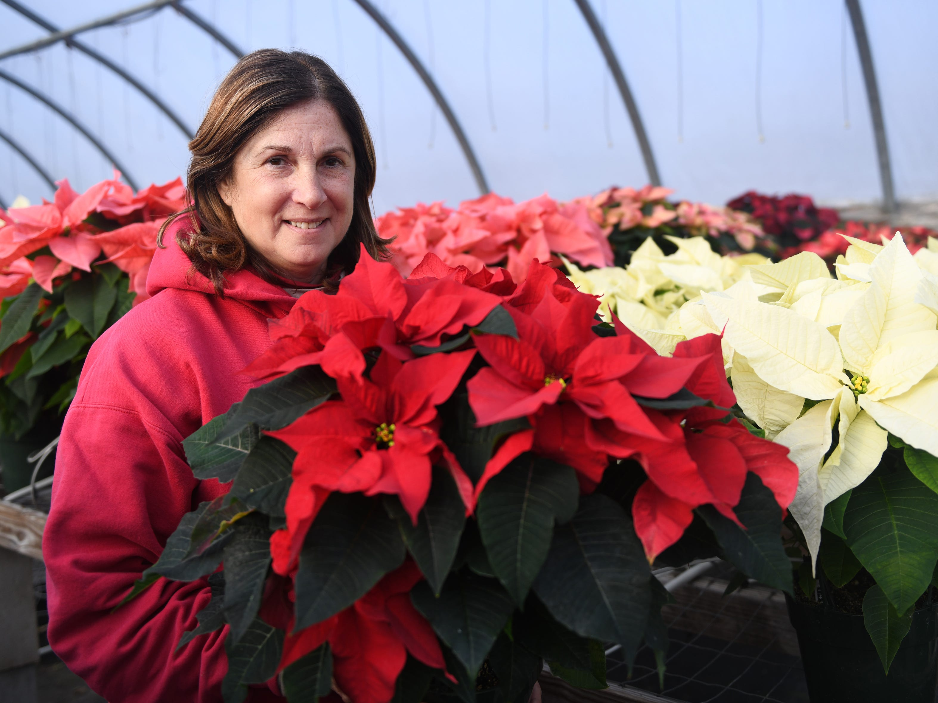 Patty Huffman holds a poinsettia that her farm produces. Huffman Farms starts to grow the plants in July so they are ready for the Christmas season. Poinsettias are available in several different colors and sizes at 296 S. Blue Bell Road in Vineland.