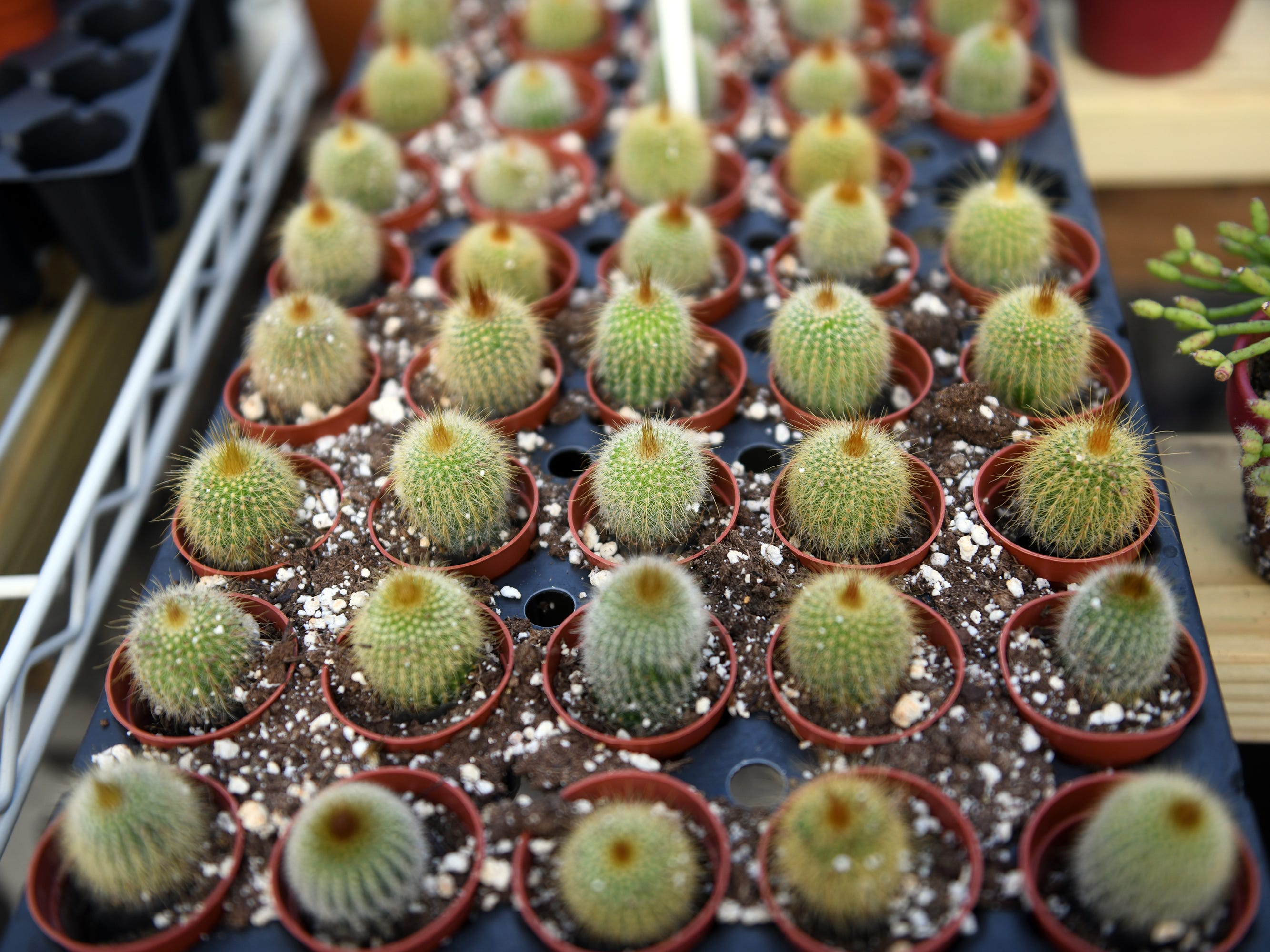 Huffman Farms also sells a variety of cactus plants.