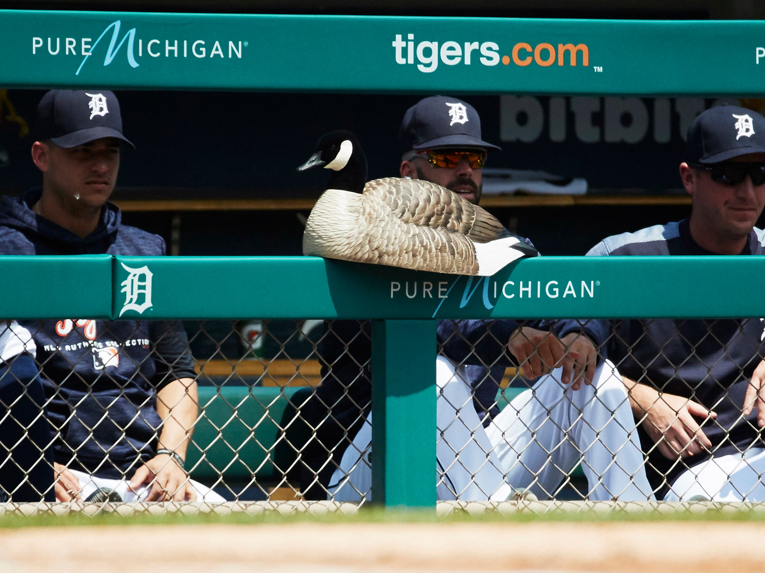 """May 31: The Detroit Tigers' """"Rally Goose"""" sits in the dugout during the first inning against the Los Angeles Angels at Comerica Park."""