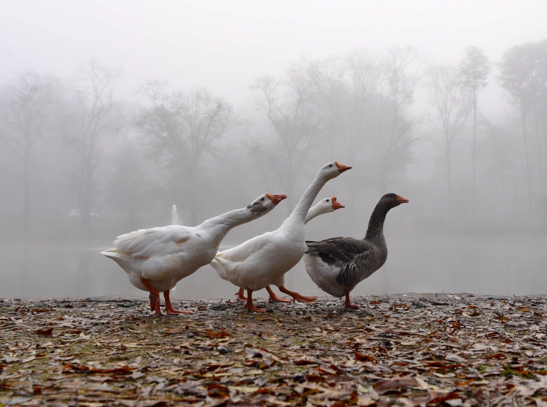 Foggy morning at Cater's Lake near Greenville Street in Anderson on Dec. 11, 2018.
