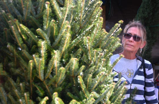 Kim Durfree looks through an assortment of live Christmas trees at Tropical Island Nursery and Landscaping on Plumosa St. on Merritt Island looking for just the right tree.
