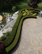 Boxwood is frequently used in landscaping, as shown here at a home in Lake Orion in this May 2013 photo.