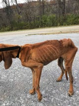 The Cocke County Sheriff's Office arrested Terry Starnes, shelter director of the Friends Animal Shelter in Newport, on Monday and charged him with cruelty to animals, according to a news release from the sheriff's office.