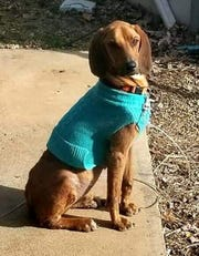 Kyler has jumped to 54 pounds as of his last vet visit. He is also heartworm negative.