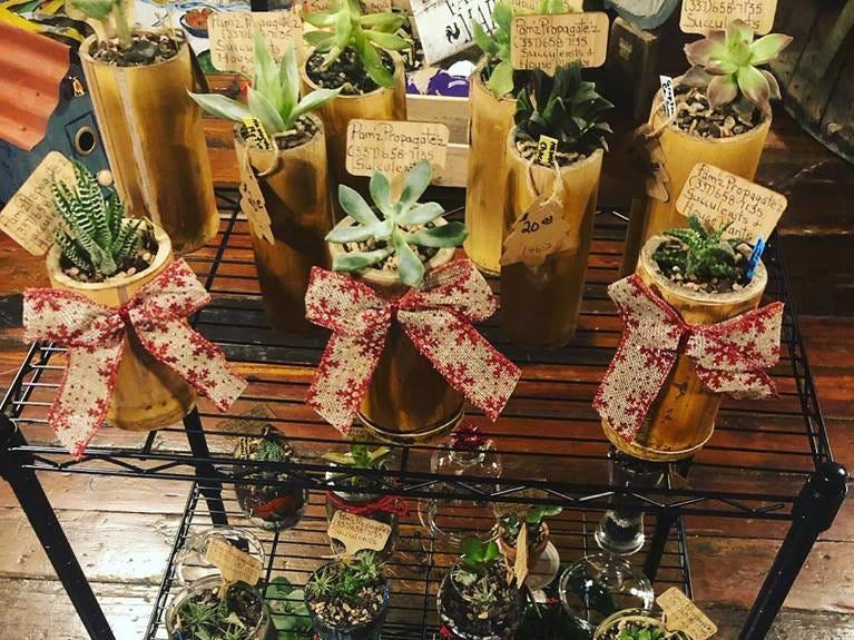 Cute succulents sold at Artique