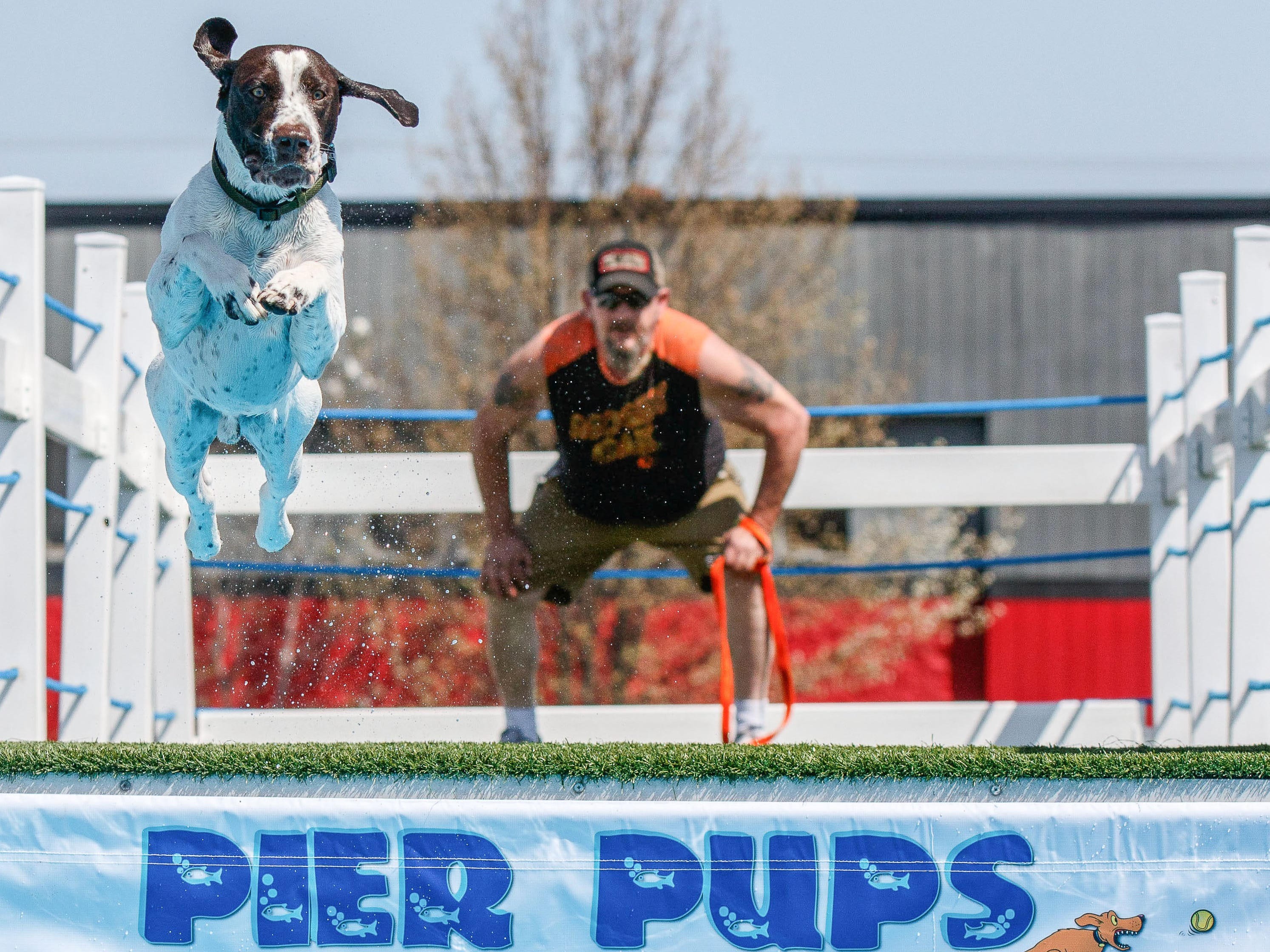 Paul Demler of Sheboygan Falls looks on as Gunner, his German shorthaired pointer, launches off the dock during the Pier Pups Canine Dock Jumping competition at the annual Wag, Woof & Walk event in Cedarburg.
