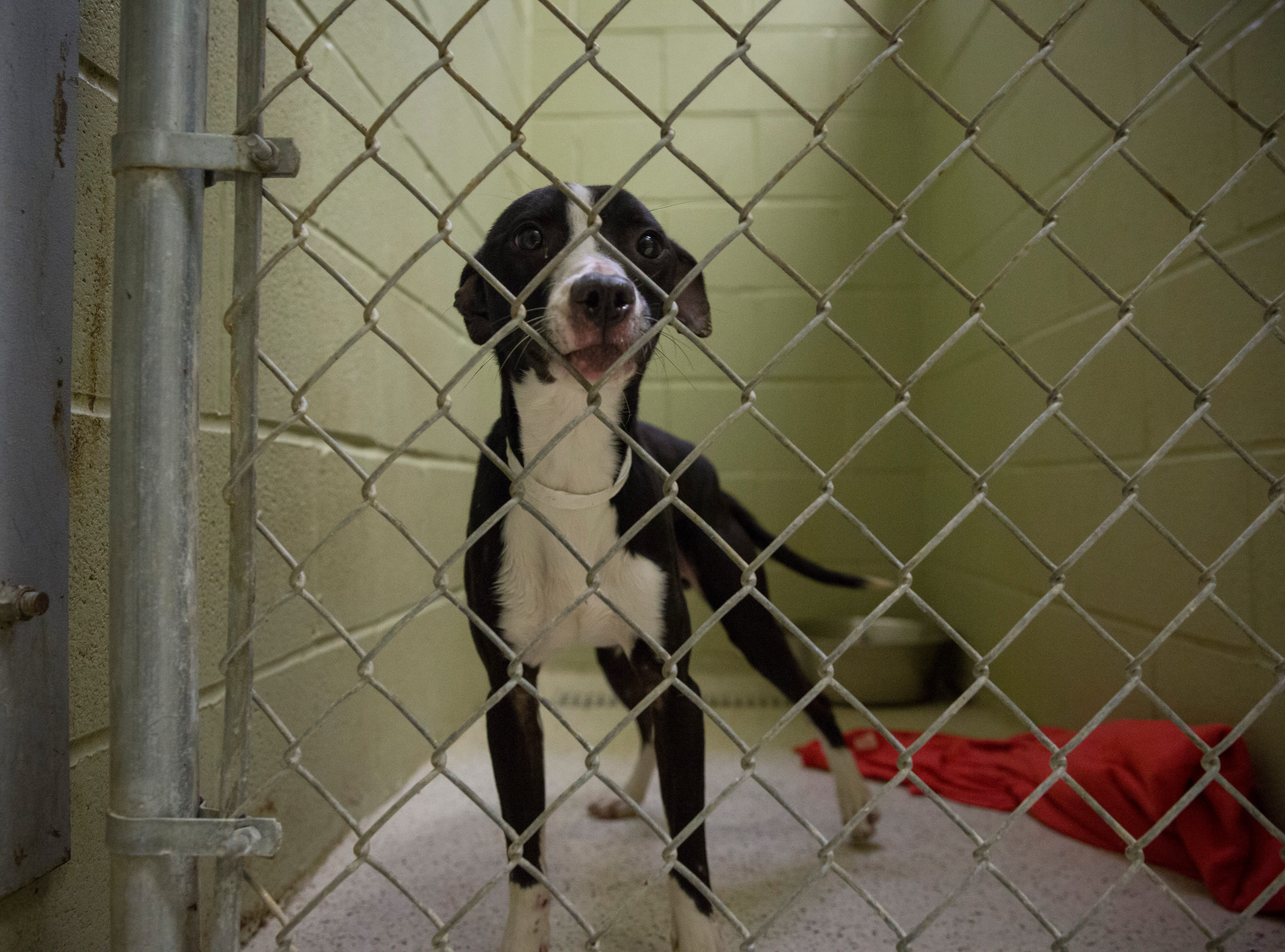 Only a few cats and dogs remain at the Muncie Animal Shelter on Tuesday. The shelter still has 12 dogs and 15 cats waiting for adoption.