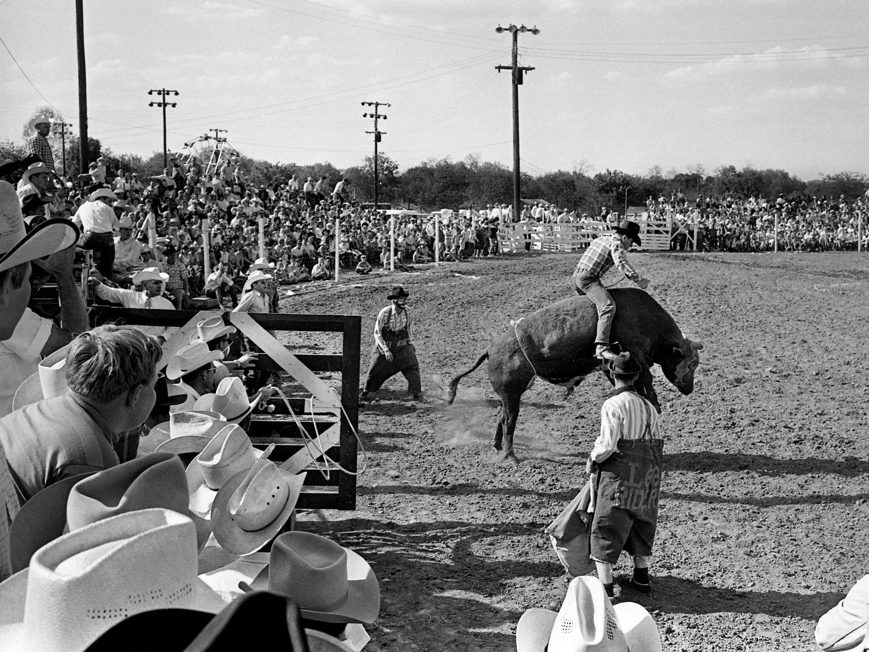 A packed house at the County Center on Columbia Highway watches a bull rider try his luck on a snorting, leaping Brahma during the 19th annual Franklin rodeo May 4, 1968. The event was sponsored by the Franklin Rotary Club, with proceeds donated to various charity projects.