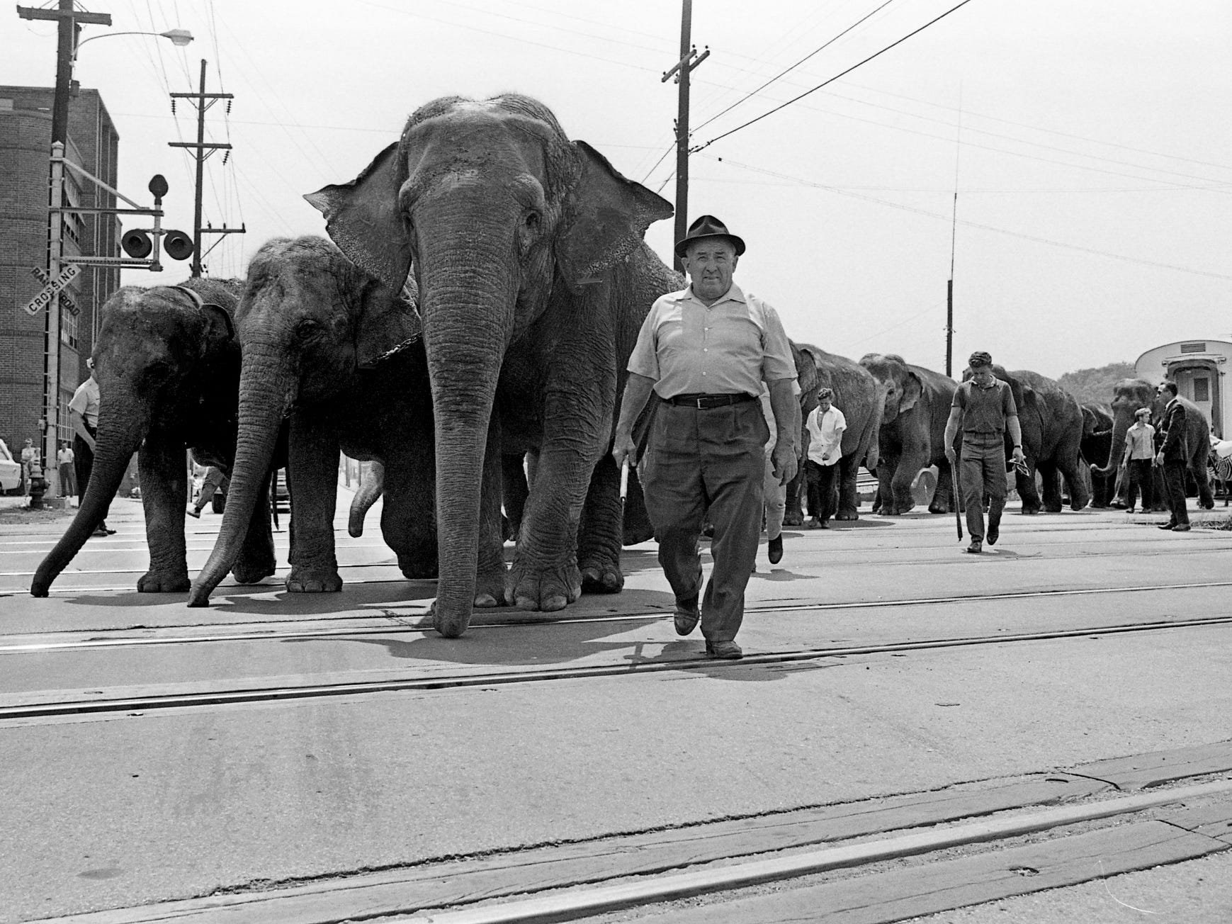 "The elephants of the Ringling Bros. and Barnum & Bailey Circus leave the L&N tracks near 415 Chestnut St. and start their march to the Municipal Auditorium on June 20, 1968, where they will get ready for their ""Greatest Show on Earth."""