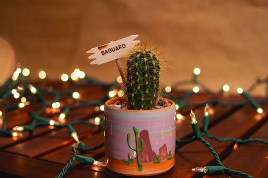 Mini Saguaro